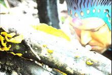 Combat Caveman
