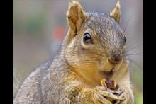 Mr Squirrel The Squirrel