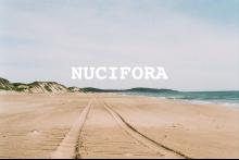 Nucifora