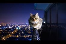 Kitty.Kat